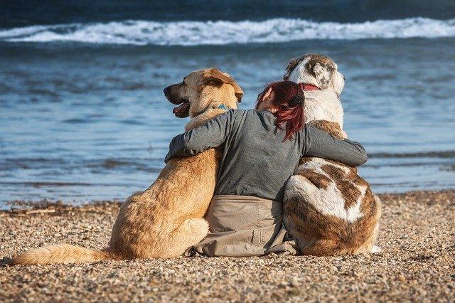 Pet Hotel Gaeta dog lovers
